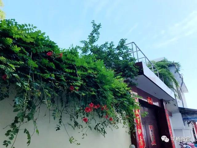 『家在平桥』城之变:绿色是美好生活的底色