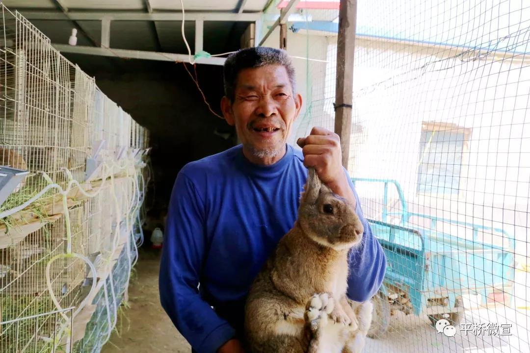 """王岗""""兔子哥""""养兔有名堂:带动周边乡亲摘掉贫困帽"""
