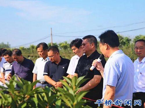平桥区人大常委会开展《中华人民共和国森林法》执法检查