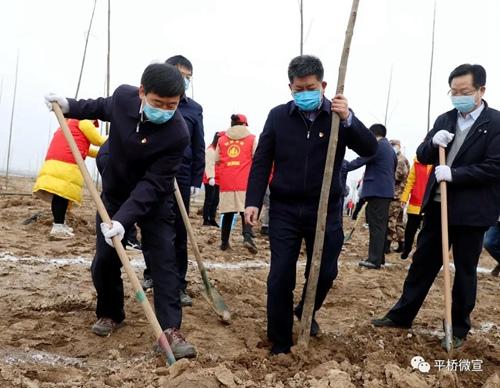 乔新江尚朝阳来平桥区参加全市春季义务植树活动