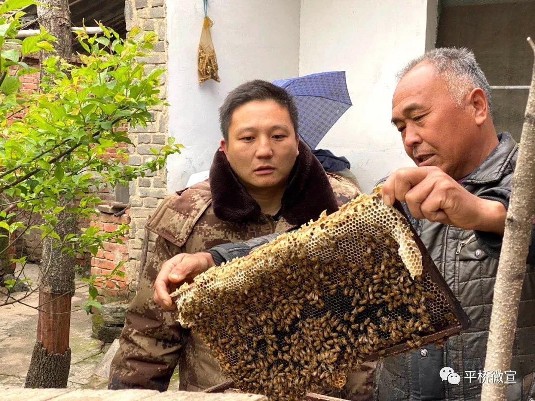 """王岗乡王楼村贫困户高立明:百花香里说""""蜂""""年"""