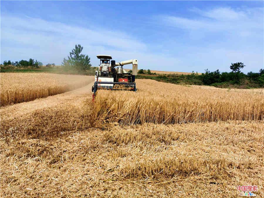 中国搜索:信阳平桥:抢农时 万亩小麦收割忙